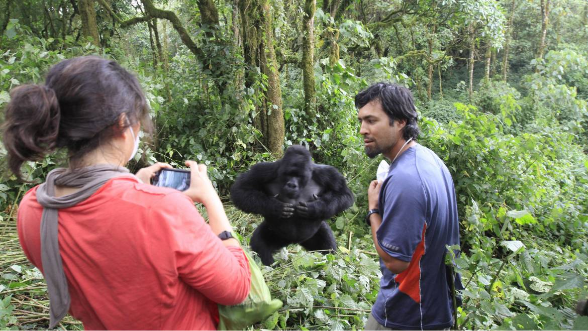 tourist-in-virunga-park-with-gorilla.jpg